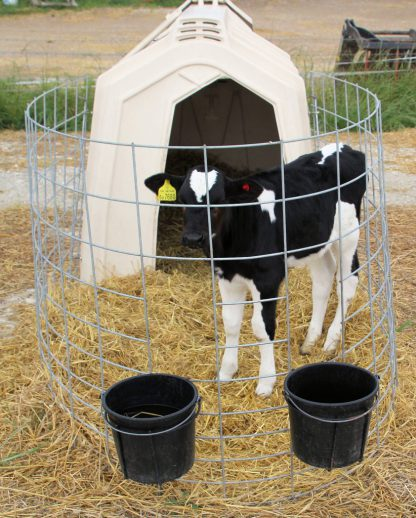 Buckets and holders attached to calf hutch fence