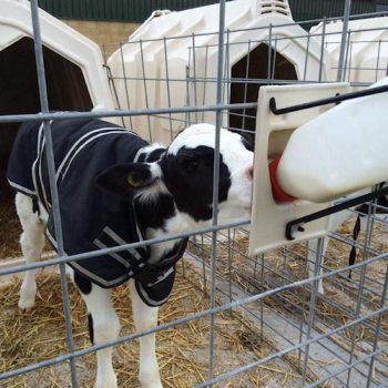 Calf jacket with feeding bottle and fence attachement