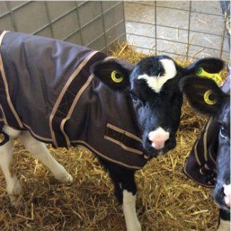 cosy calf jackets