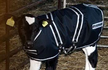 cosy calf jacket from intershape