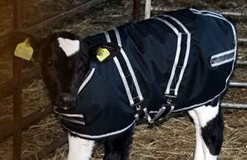cosy calf jacket from intershape