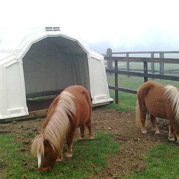 Shetlands in large animal shelter