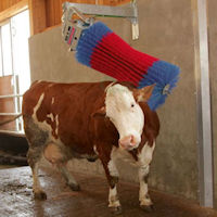 Swinging Automatic Cow Brush