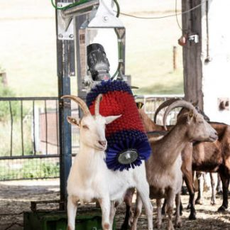 Swinging Brush for Goats