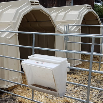 Calf pellet feeder on Multimax group hutch