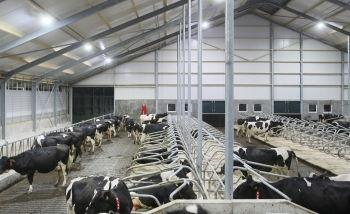 LED barn lights for livestock